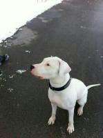 traumhund sucht zu hause