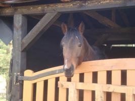 unerfahrenes pferd sucht erfahrenen reiter