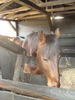 Foto 2 unerfahrenes pferd sucht erfahrenen reiter