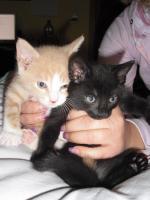 verkaufe 3 süße katzenbabys