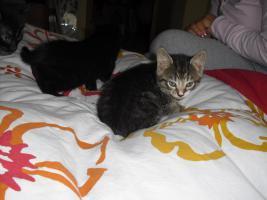 Foto 3 verkaufe 3 s��e katzenbabys