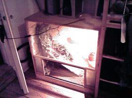 verkaufe terrarium aus holz