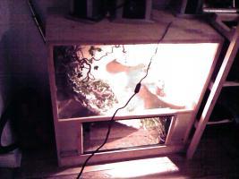 Foto 2 verkaufe terrarium aus holz