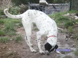 Foto 3 versch. Hunde aus Tötungsstation suchen Zuhause