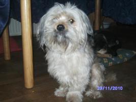 Foto 4 versch. Hunde aus Tötungsstation suchen Zuhause