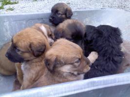 verschencke hunde babys