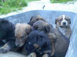 Foto 2 verschencke hunde babys