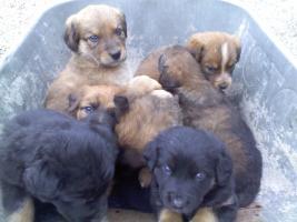 Foto 3 verschencke hunde babys