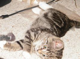 Foto 2 verschenke eine katze
