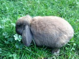 Foto 7 verschiedene kaninchen rassen
