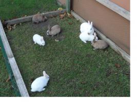 vier kaninchenmädchen suchen dringend neues zuhause
