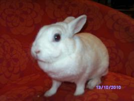 weibl. Kaninchen ca. 3 1/2 Jahre sucht neues zu Hause