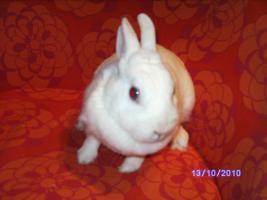 Foto 4 weibl. Kaninchen ca. 3 1/2 Jahre sucht neues zu Hause