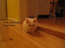 Foto 3 wei�e katzen 9 wochen alt