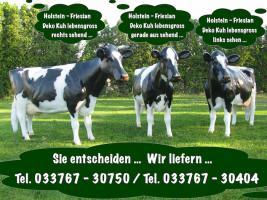 Foto 3 wie gross ist eine Holstein Deko Kuh --- ja unsere hauseigene ...