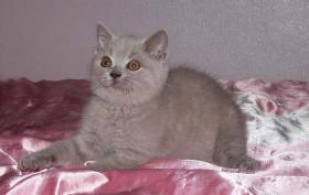 Davida - Mädchen in lilac