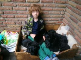 zuckersüsse pechschwarze hundewelpen ende juni vhb 400,00