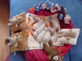zuckersüße reinrassige Malteser Babys zu verkaufen