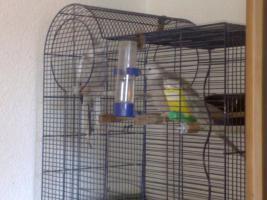 zwei Vögel mit Käfig