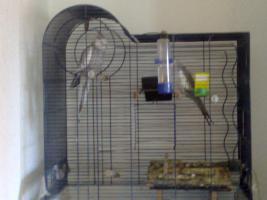 Foto 2 zwei Vögel mit Käfig