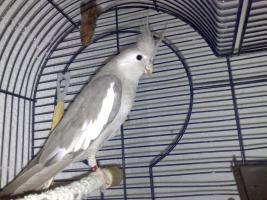 Foto 3 zwei Vögel mit Käfig