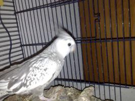 Foto 4 zwei Vögel mit Käfig