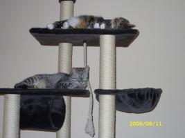 zwei liebe Katzen in liebevolle H�nde abzugeben