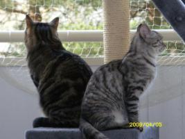 Foto 3 zwei liebe Katzen in liebevolle H�nde abzugeben