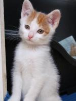 1 rot-weisses Kätzchen zu vergeben