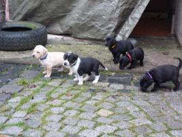 10 Hundebabies