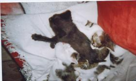 10 Wochen alte Kitten abzugeben
