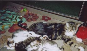 Foto 2 10 Wochen alte Kitten abzugeben