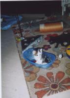 Foto 5 10 Wochen alte Kitten abzugeben