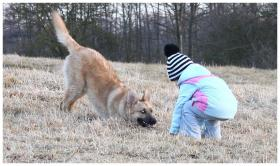 11-12 monat alte familien hund