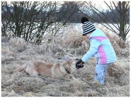 Foto 3 11-12 monat alte familien hund