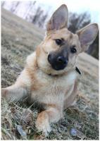 Foto 8 11-12 monat alte familien hund