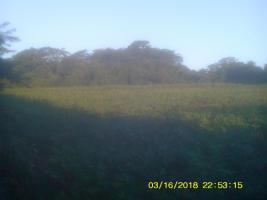 Foto 2 11 Hektar Grundstück in Paraguay bei Independencia direkt am Asphalt