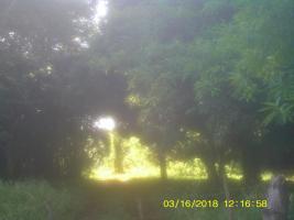 Foto 4 11 Hektar Grundstück in Paraguay bei Independencia direkt am Asphalt