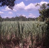 Foto 5 11 Hektar Grundstück in Paraguay bei Independencia direkt am Asphalt