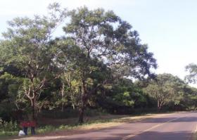 Foto 6 11 Hektar Grundstück in Paraguay bei Independencia direkt am Asphalt