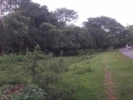 Foto 7 11 Hektar Grundstück in Paraguay bei Independencia direkt am Asphalt