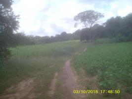 Foto 9 11 Hektar Grundstück in Paraguay bei Independencia direkt am Asphalt