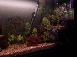 Foto 2 110 Liter-Aquarium mit Unterschrank in HH Barmbek