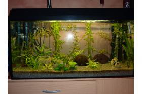 112 Liter Aquariumkomplettset mit Fluval Aussenfilter