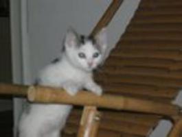 Foto 3 12-Wochen alte Katze zu verkaufen!