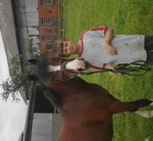 12 jähriger hübscher pony wallach zu verkaufen