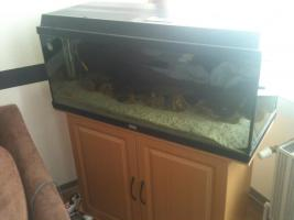 1m Aquarium in buche