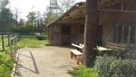 Foto 2 2 Gnadenbrot/Rentnerplätze in Privatstall frei...