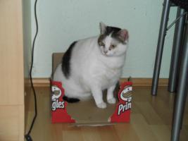 Foto 3 2 Hauskatzen