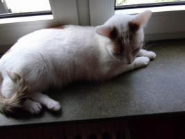 Foto 4 2 Hauskatzen